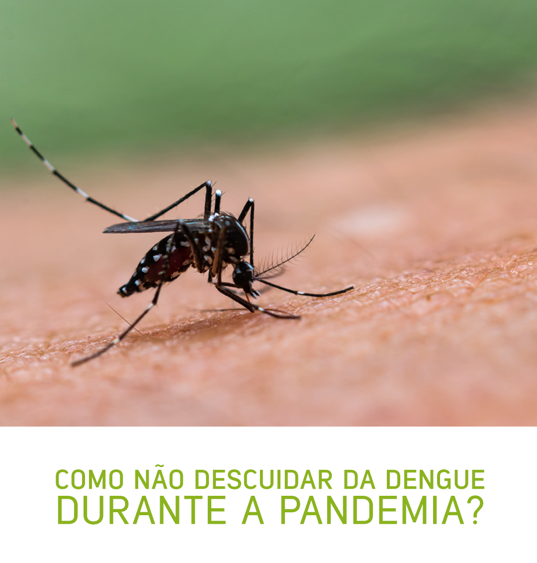 Como não descuidar da dengue durante a pandemia?
